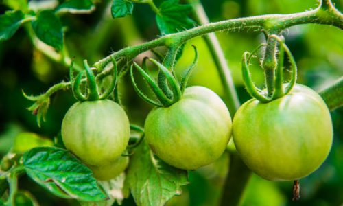 Agric Science – JSS3